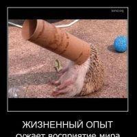 """<strong>красивые фото 3</strong><br/> <span style=""""font-size:0.8em"""">Используйте стрелки чтобы листать изображения</span><br/> <a href=""""http://detsky-mir.com/gallery/user/123/116/1127""""><span style=""""font-size:0.8em"""">Комментировать(0)</span></a> <a href=""""http://detsky-mir.com/gallery/user/123/116/1127""""><span style=""""font-size:0.8em"""">Рейтинг:(0)</span></a>"""