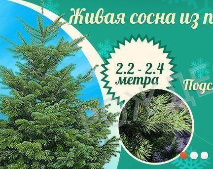 Новогодняя елка: искусственная или настоящая