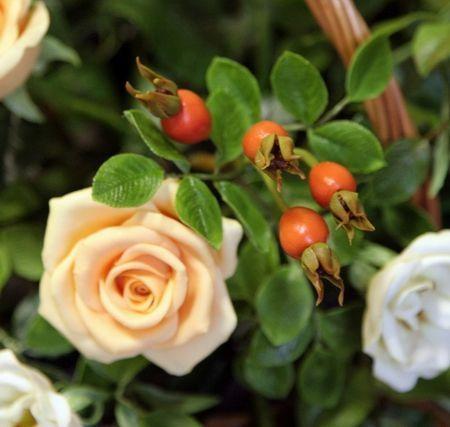 Шиповник , розы