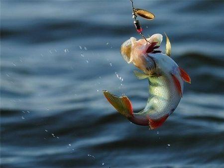 Пап, на какое место пойдём рыбачить
